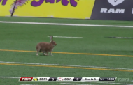 [CFL] Analisi tattica di un coniglio in touchdown