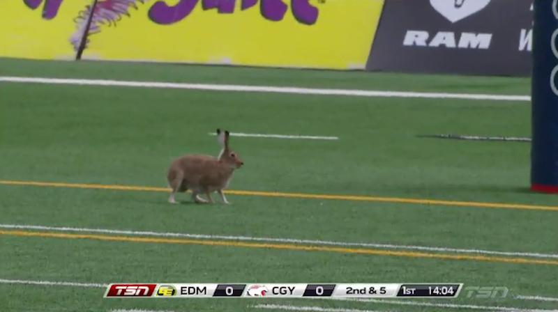 [CFL] Analisi tattica di un coniglio in touchdown
